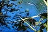 Plitvička jezera dragonfly