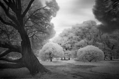 Tree magic in black and white (MarxschisM) Tags: ir filter long exposure black white park trees windy blurry latvia