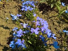 WP_20170604_10_29_54_Pro (vale 83) Tags: bee microsoft lumia 550 friends macrodreams wpphoto wearejuxt flickrcolour colourartaward coloursplosion beautifulexpression
