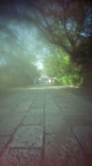 松蔭神社 (nikosaminira1) Tags: colorfilm 160ns pinhole pinholecamera analog film filmphotografy analogphotografy diycaera papercraft papercraftcamera 120 120film wppd