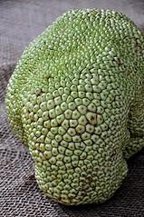 Not a brain but a Jack Fruit (jungle mama) Tags: jackfruit cauliflory fruit tropicalfruit fairchildtropicalbotanicgarden jakfruit jack jak fig breadfruit mulberry