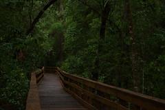 DSC_4270 (River-Life) Tags: riverlife nikon d5300 florida nature highlandshammockstatepark outdoors outdoor walkway
