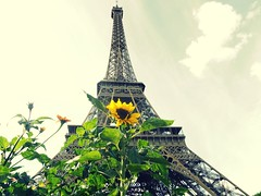 Lo Bello de la Vida (Karloz Silva) Tags: paris francia torreeiffel tower turista viaje vacaciones vacations toureiffel girasol flor sky bello vida nube