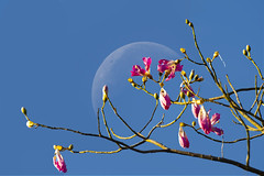Flower & Moon (luo_wyne) Tags: