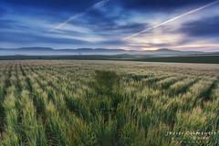 Amanecer en Añastro (Javier Colmenero) Tags: alavavision castillayleon loschicosdealba nikon nikond7200 sigma1020mm amanecer cereal filtrosraymaster longexposure sunset largaexposicion sunrise