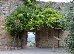 cancello sulla valle (Mancio85) Tags: vista view pergolato pergola natura nature san gimignano italia italy toscana tuscany gate cancello canon 80d