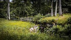 _61A4232.jpg (fotolasse) Tags: stenfors natur nature sweden sverige småland kronoberg å vatten water river bäck sten grönt green canon hdr 16x9 tingsryd