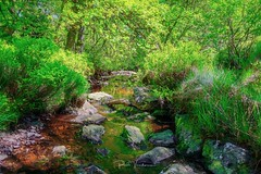 River of colour (rudi.verschoren) Tags: hautes fagnes belgium walloon signal de botrange water river rocks vallée woods woodland canon colors contrast outdoor landscape light leaves green glow grass flow fairy ngc nature mood reflection artistic o