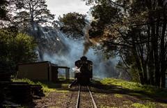 Darken the sky (michaelgreenhill) Tags: pbr clematis climax backlight australia 1694 backlit trains victoria twilight steam puffingbilly emerald au