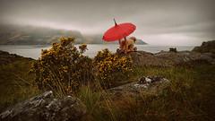 Just Walkin the Dog... (Harleynik Rides Again.) Tags: dog weirdshit parasol backshot glenelg scotland juxtaposition harleynikridesagain weather