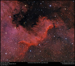 """The North America Nebula NGC7000 """"Cygnus Wall"""" (crop) (Terry Hancock www.downunderobservatory.com) Tags: qhy qhy367c astronomy astrophotography astroimaging sky cosmos"""
