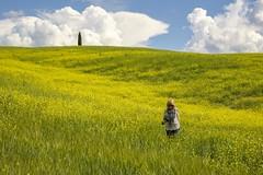 in mezzo a  un mare di fiori gialli. ... (miriam ulivi) Tags: italia toscana sanquiricodorcia campodicolza rapefield giallo yellow fiori flowers cipresso collina hill paesaggio landscape nature miriam