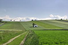 Niederösterreich Weinviertel Herzogbirbaum_DSC0501 (reinhard_srb) Tags: niederösterreich weinviertel herzogbirbaum kellergasse abendlicht sonne weinkeller wiese weg acker feld landwirtschaft horizont wolken feldfrucht anbau