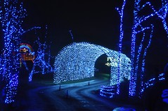 17 Light Tunnel (megatti) Tags: buckscounty christmas christmaslights pa pennsylvania shadybrookfarm tunnel yardley