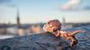 Lurking over Stockholm (Reiterlied) Tags: 18 35mm d500 dslr dino dinosaur frankensteinosaurus lego legography lens nikon photography prime raptor reiterlied stuckinplastic trap trex toy tyrannosaur velociraptor velociraptosaurusrex velocirex