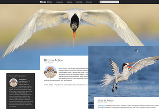 Flickr Blog Feature