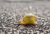Snail 1 (elzauer) Tags: laufen bayern germany de macro animalantenna animalshell animalthemes animalsinthewild colourimage day differentialfocus elevatedview imagefocustechnique outdoors photography street textured wildlife snail