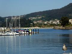 Gaviota paticoja (juantiagues) Tags: bueu puerto mar barcos pesqueros juantiagues juanmejuto