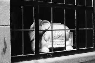 The Elephant in the ...window P30 Ferrania pyrocat HD