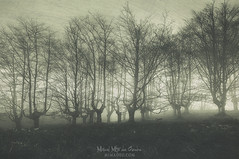 Bosque (Mimadeo) Tags: scary forest fear horror mood monochrome landscape magic tree nightmare light nature mystery spooky darkness halloween woods evil creepy fantasy gothic mysterious surreal branch enchanted ghost atmosphere twisted