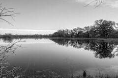Wetlands Monochrome (randyherring) Tags: ca california wetlands elkgrove nature centralcaliforniavalley afternoon cosumnesriverpreserve outdoor monochrome recreational galt unitedstates us