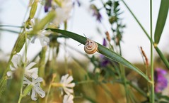 By the grass gathered (fdlscrmn) Tags: grass flowers nature colorful snail dof 7dwf wildlife sheel