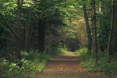 Eifel Path (Netsrak) Tags: tree trees baum bäume green grün forest forst wald eifel path way weg waldweg