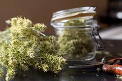 La farmaciola (Pilonga) Tags: rabetdegat medicina natural desinfectant curar farmaciola herbes remeis 193