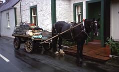 moniaive 12th sep 1974 (foundin_a_attic) Tags: moniaive 12th sep 1974 horse milkman rain