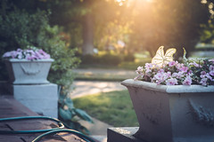 June 12, 2017-2 (kelly ishmael) Tags: frontporch goldenhour summer