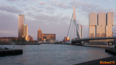 Pont Erasmusbrug, Rotterdam, Hollande - 2383 (rivai56) Tags: pont erasmusbrug night nuit rotterdam hollande