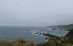 Only One Ocean (Room With A View) Tags: ocean sea pacific mendocino odc