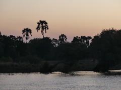 P1150524 Zimbabwe (20) (archaeologist_d) Tags: zimbabwe zambeziriver zambezinationalpark africa southernafrica safari