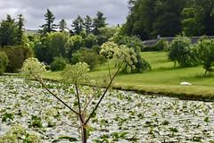 Blair Castle Gardens