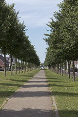 Stand in line (Martijn A) Tags: trees bomen path pad light licht shadows schaduw canon77deos canon70200mmf4lis wwwgevoeligeplatennl