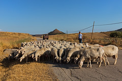 Sheeps On The Street (Cornelli2010) Tags: canon1635mmf4lisusm canoneos5dmarkiii beautiful italien italy landscape landschaft natur nature people rtuili sardegna sardinia sardinien schafe schäfer sheeps sheperd
