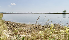 IMG_1237 (kevindalb) Tags: italia italy italie santhià vercelli via francigena viafrancigena risaia rice riz field champ acqua water eau 2017 piemonte