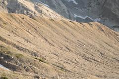 expo-8249 (ernst.scherr) Tags: grã¼n adamekhütte gosau dachstein salzkammergut gletscher schnee natur mondaufgang mondlicht sonnenuntergang alpen pflanzen