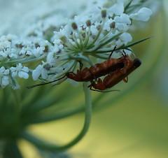 MacroMonday - Bottoms Up (passionpapillon) Tags: macro insecte macromonday bottomsup passionpapillon 2017