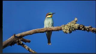 Apresentação Fotos Aves 4
