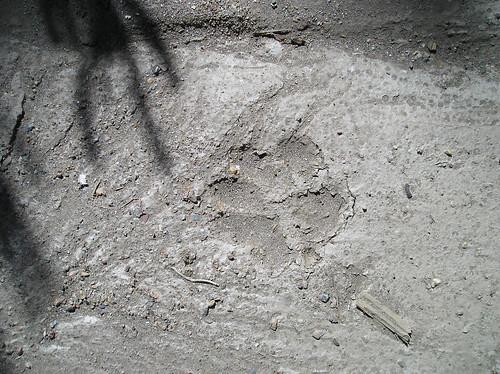 Senderismo Sierra Cabrera Alto Vizcodillo Foto Javi Cille