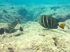 Hanauma Bay 20 (venusnep) Tags: hanaumabay hanauma bay underwater tropicalfish tropical fish iphone watershot watershotpro hawaii snorkeling travel travelphotography may 2018