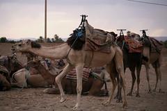 onta sahara (♥NamiQuenby♥♥♥Busy♥♥) Tags: maroko marocco sahara