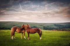Cwtching Horses