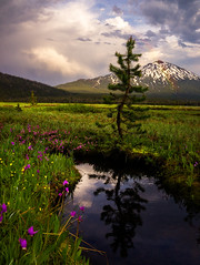 Bachelors Meadow (Maddog Murph) Tags: rainbow mount bachelor bend oregon meadow tree flowers pink yellow blue water stream creek lush grass storm thunder clouds mt sparks lake