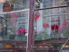 upper-town-window_