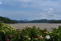 Hydrangea Sands (cassidymike21) Tags: sands beach landscape plants nikon tidal sky coast hydrangea