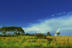 Winter Rural Landscape! (maginoz1) Tags: surreal sky rainbow abstract art manipulate curves gumtree winter july 2017 bulla melbourne victoria australia canon g3x