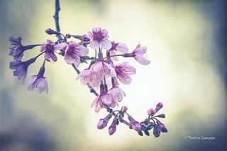 First flowering