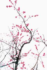 #初櫻 (David C W Wang) Tags: 東京車站 東京 日本 初櫻 sakura tokyo japan sonya7ii canon2470f28ii